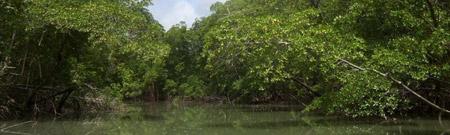 La selva amazónica, más resistente a las sequías que lo previsto
