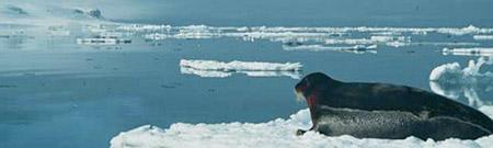 Derretimiento de los hielos del Artico - 1979/2007