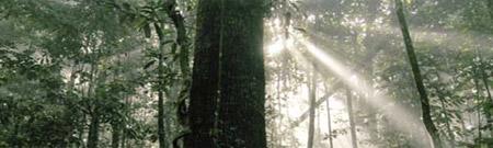 Greenpeace y la ley contra la tala ilegal de bosques