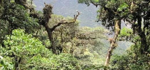 yungas y bosques nubosos en peligro