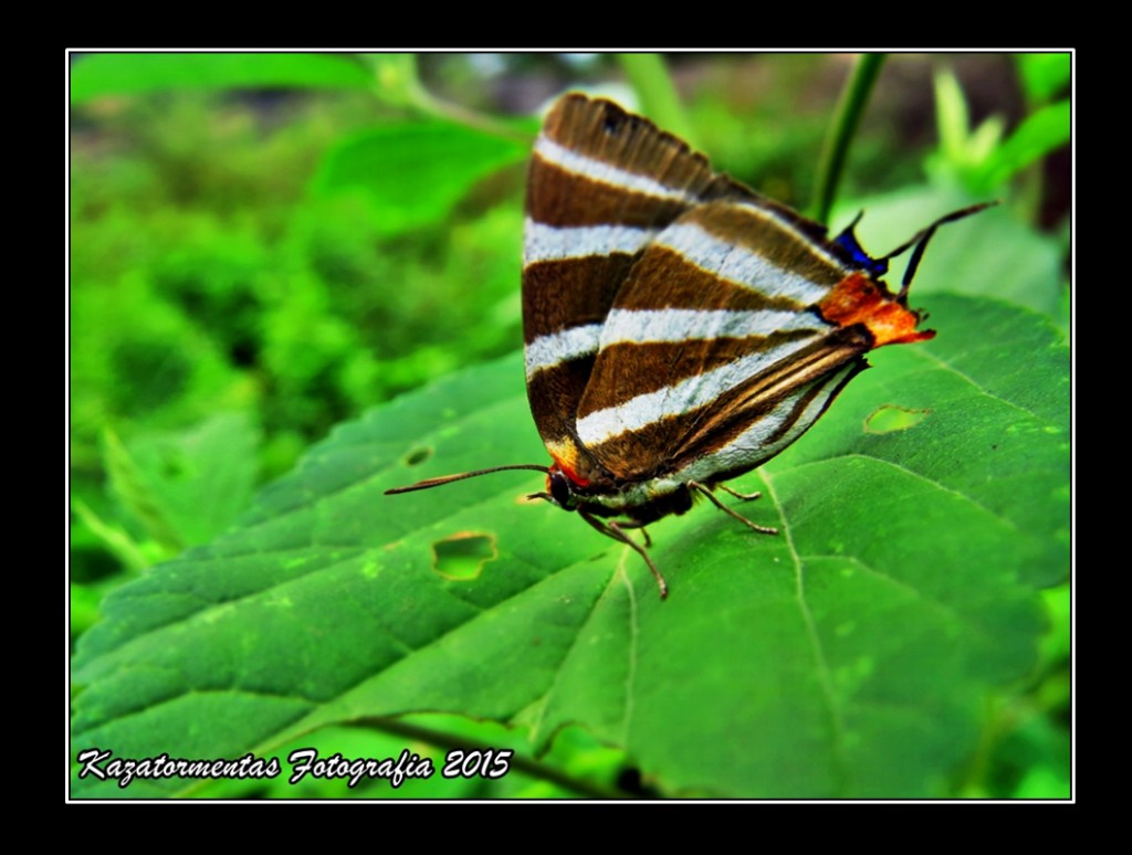 Mariposa color