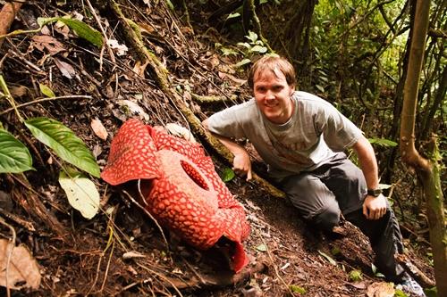 Rafflesia arnoldii5