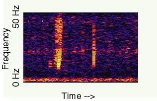 Bloop, espectrograma