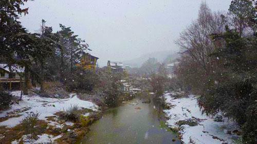 Nieve dd