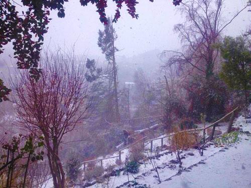 Nieve f