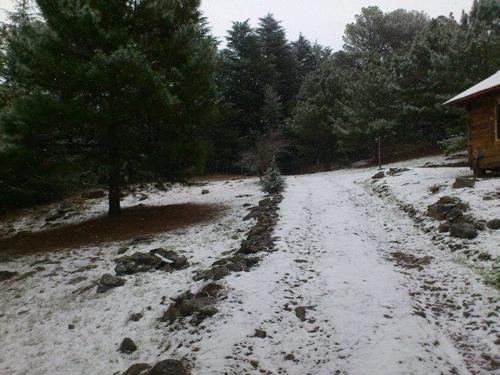 Nieve w
