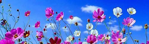 Primavera S