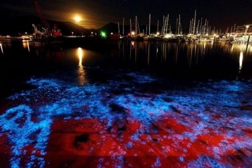 bioluminiscencia_0