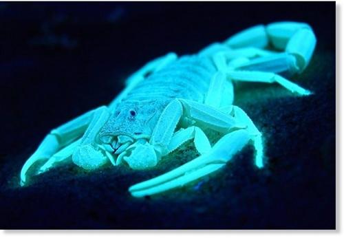 especies_bioluminiscentes1