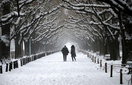 nevada f