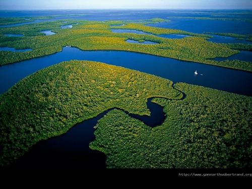 Amazona 1