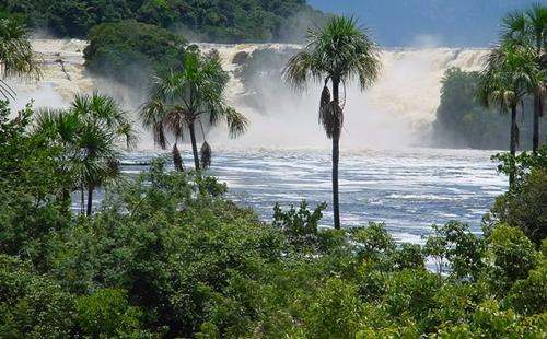 Amazona 3