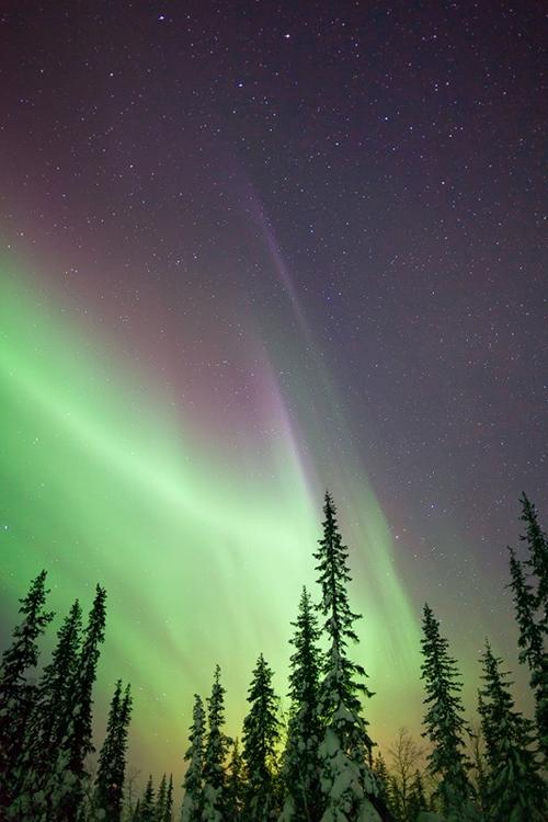 Auroras 1