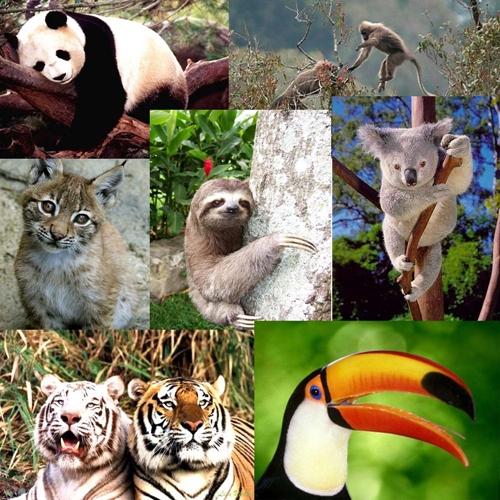 animales-en-peligro-de-extincion-en-mexico