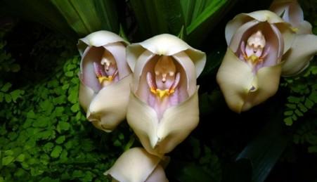 Flor prese