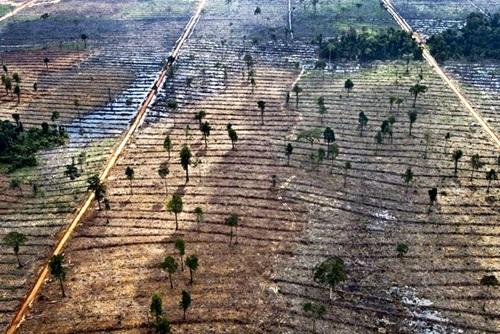 brasil-deforestacion