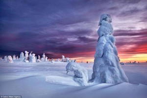 Rusia nevada