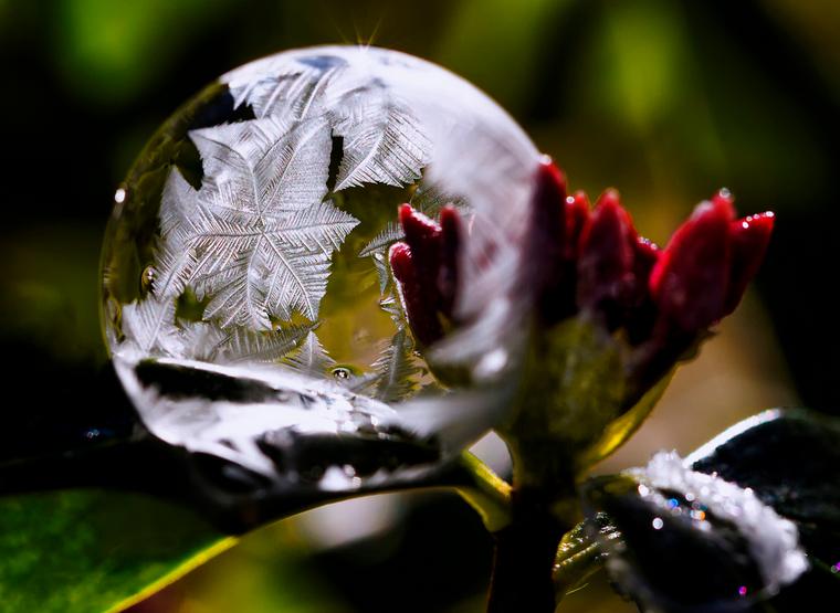 Burbujas 12