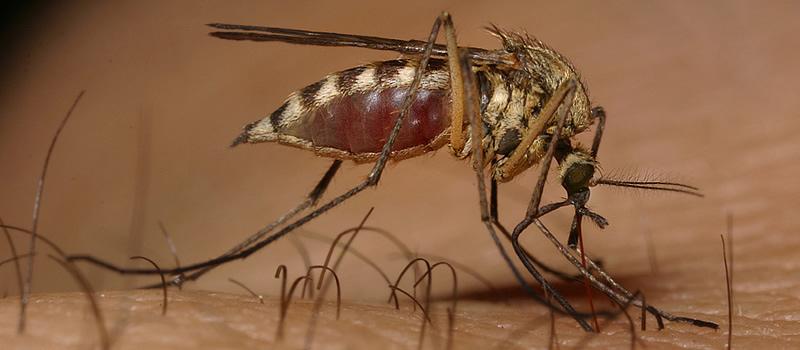 prevencion_dengue-emorragico