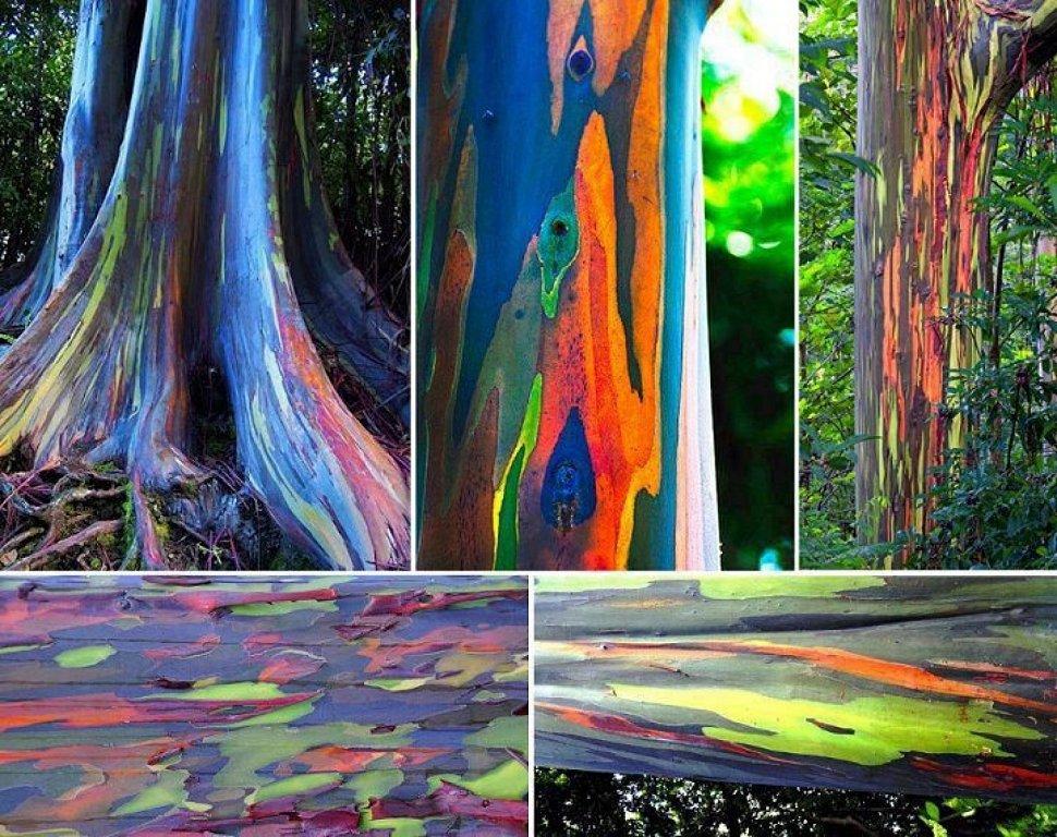 Arbol arcoiris 2