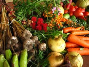 Cultivos ecologicos 2 - copia