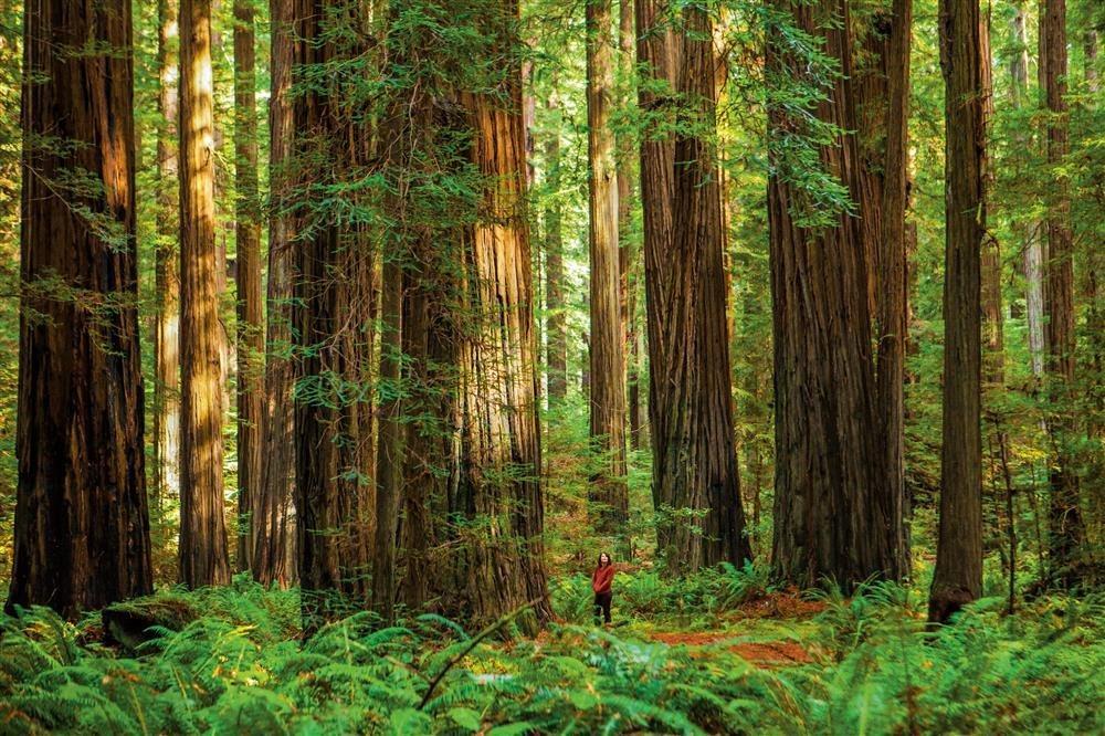Grandes en el bosque