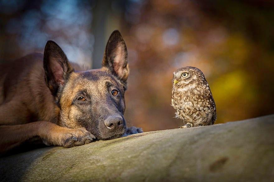 amistad de un perro y un buho 10