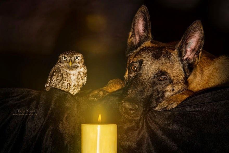 amistad de un perro y un buho 5