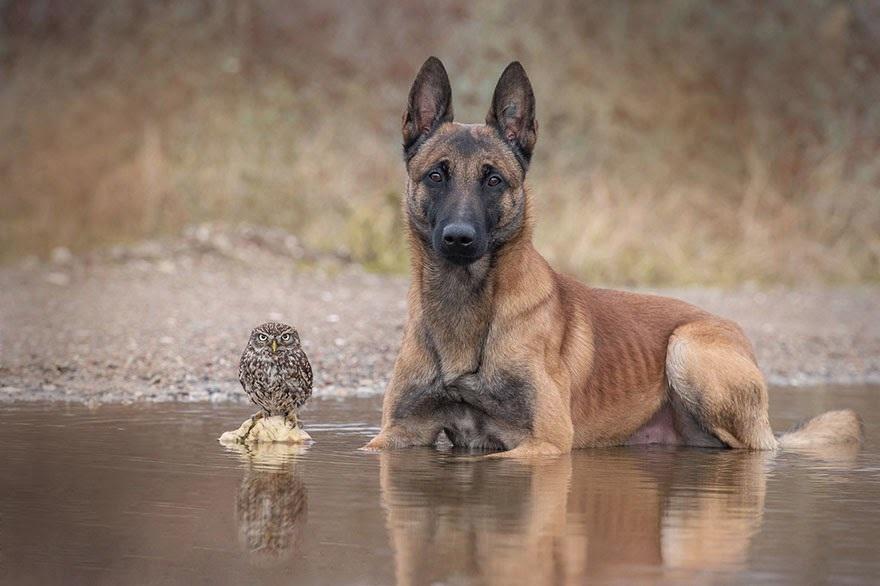 amistad de un perro y un buho 6