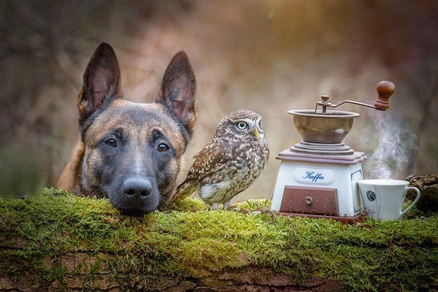 amistad de un perro y un buho 7