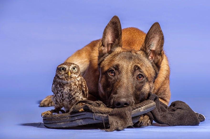 amistad de un perro y un buho 9