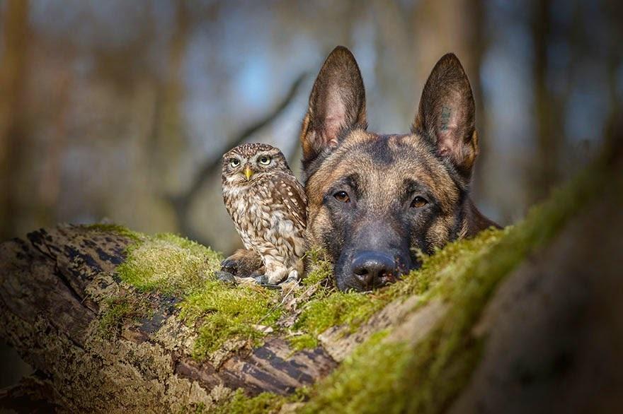 amistad de un perro y un buho