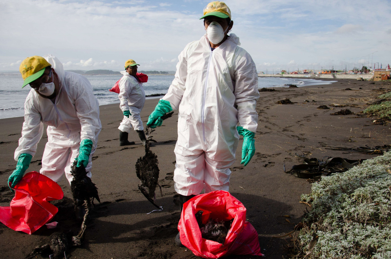 Aves muertas en playas chilenas