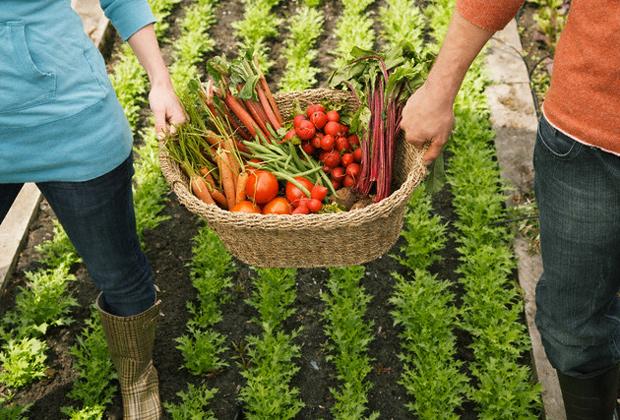 Cosecha alimentos organicos