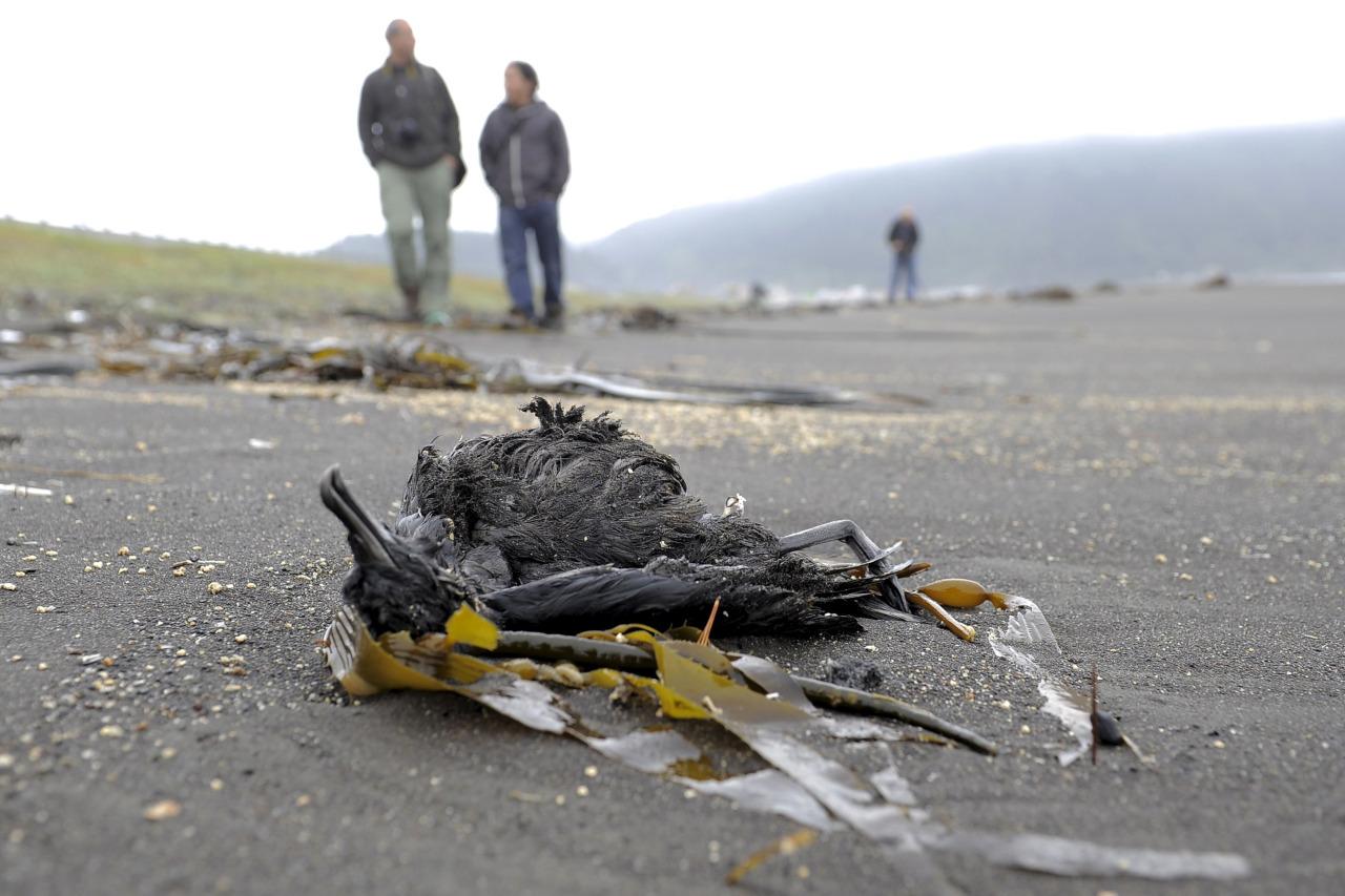 Muerte de aves en Chile 2