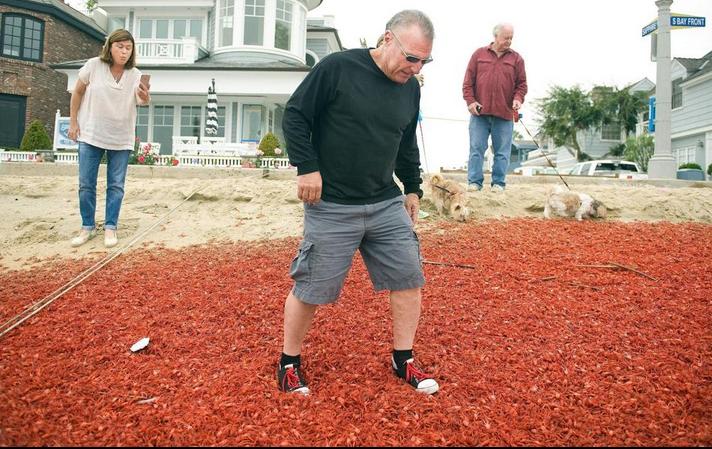 Cangrejos en playas de California 5