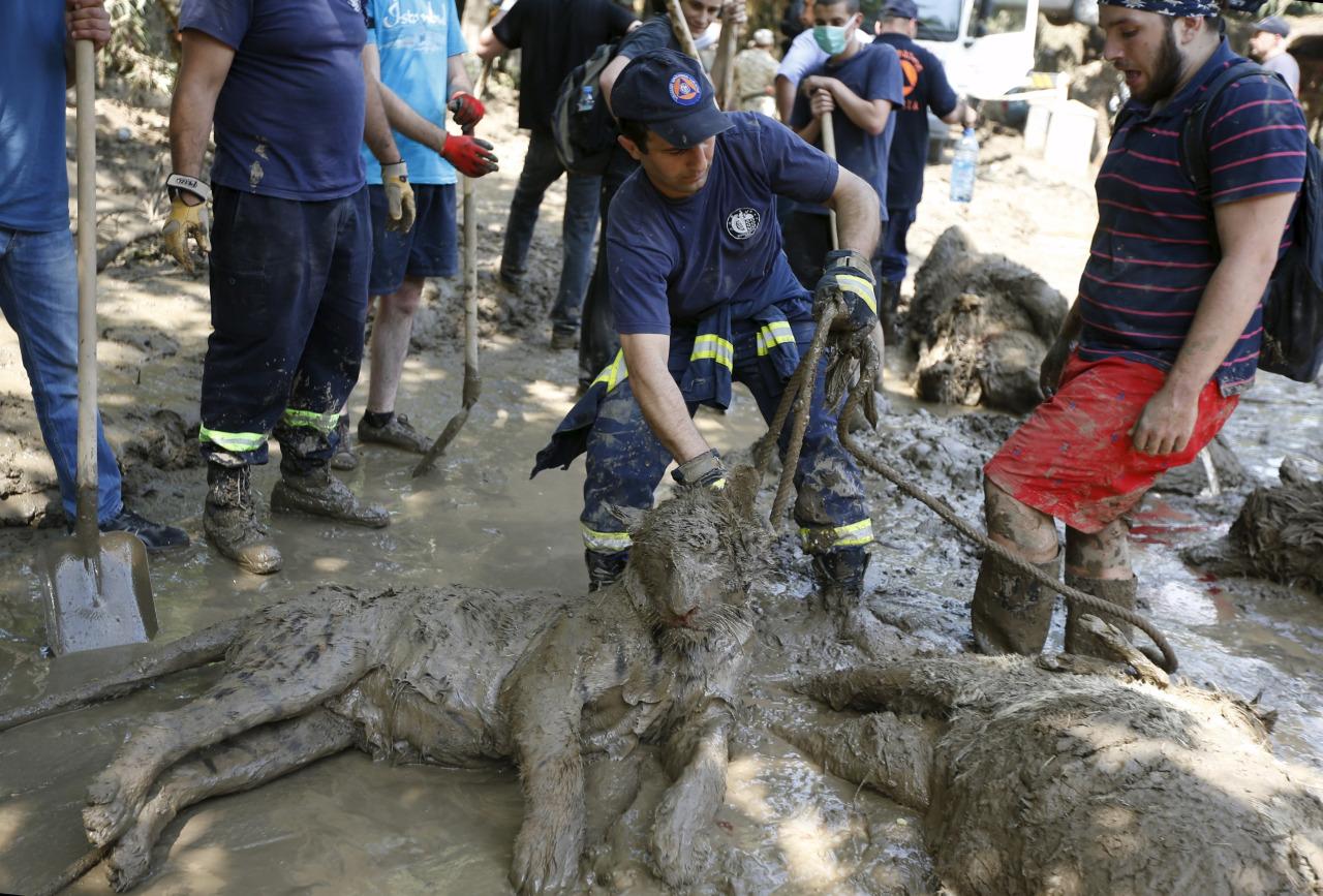 Inundacion en zoologico de Tiflis 2