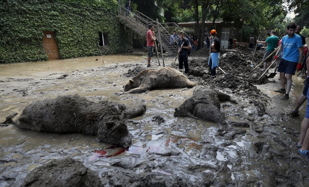 Inundacion en zoologico de Tiflis 3