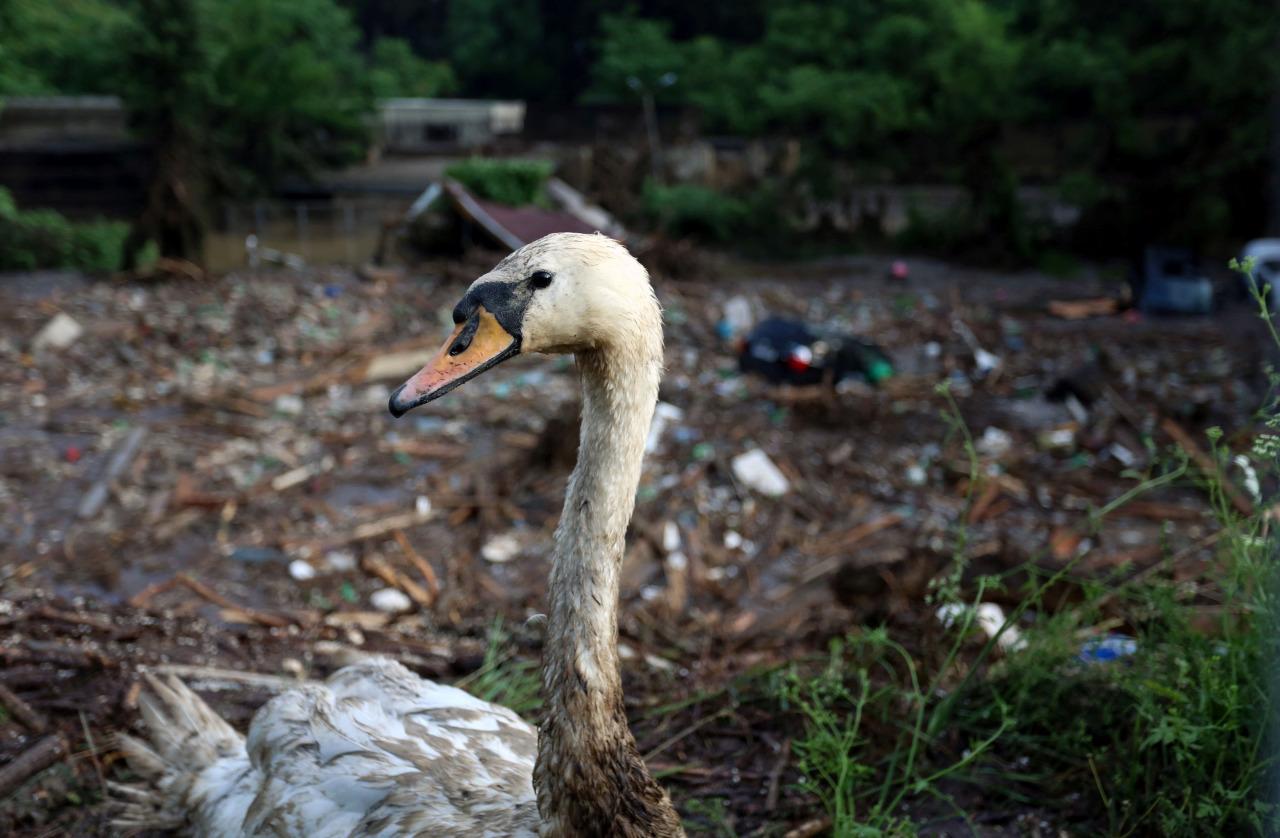 Inundacion en zoologico de Tiflis 4