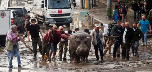 Inundacion en zoologico de Tiflis 6