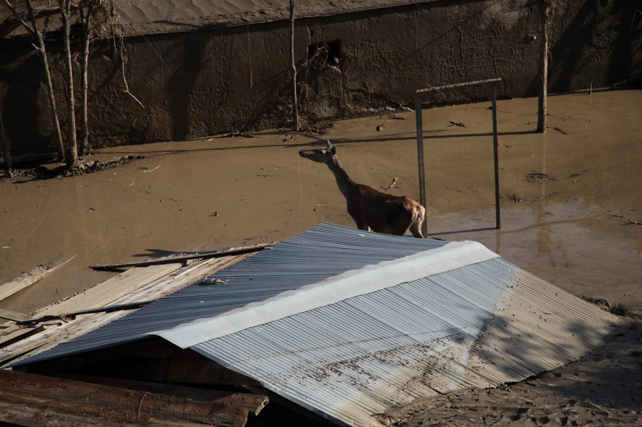 Inundacion en zoologico de Tiflis