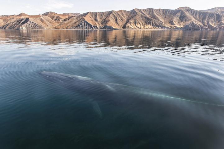 Delfines y ballenas por christopherswan 3