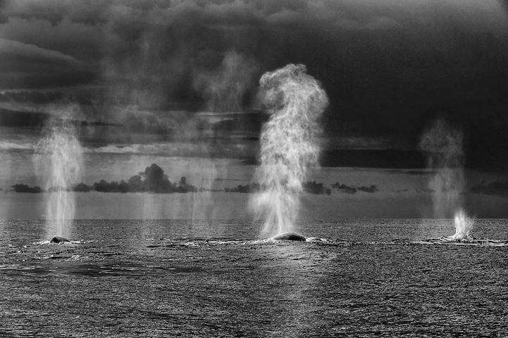 Delfines y ballenas por christopherswan 6