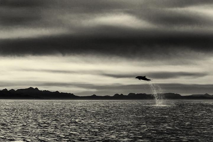 Delfines y ballenas por christopherswan 8