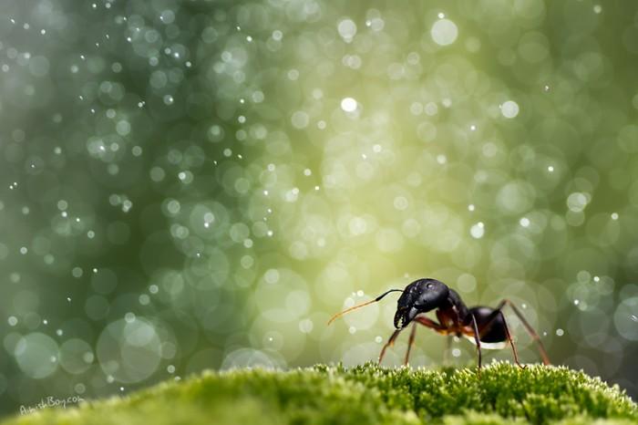 Hormigas y lluvia