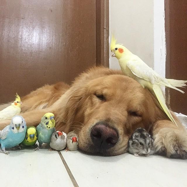 mascotas un perro ocho pajaros y un hamster 14