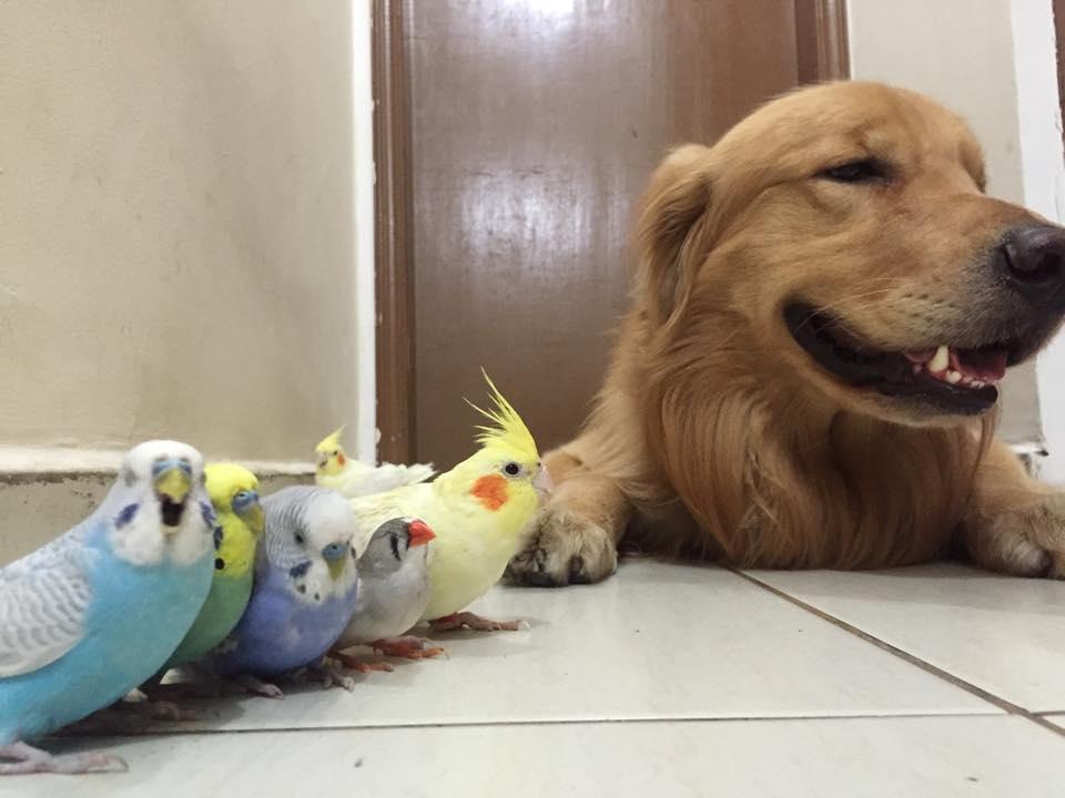 mascotas un perro ocho pajaros y un hamster 24