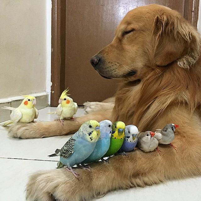 mascotas un perro ocho pajaros y un hamster 9
