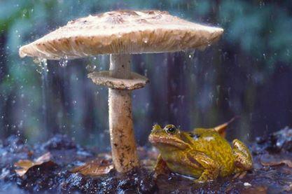 Animales con Paraguas 3