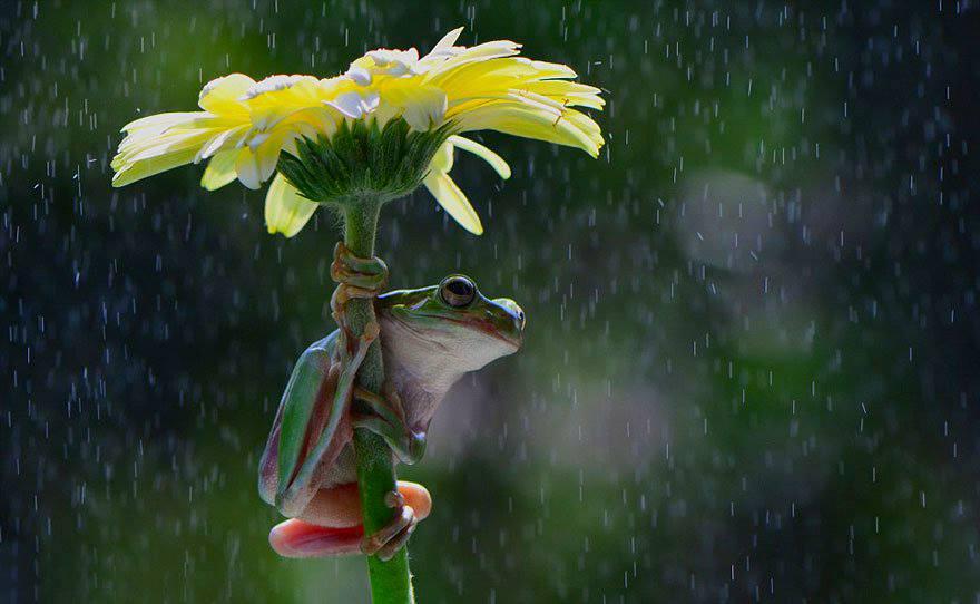 Animales con Paraguas 6
